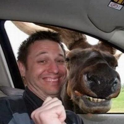 car-selfie-with-moose