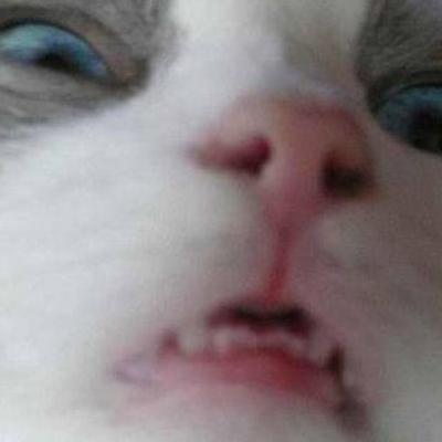 cat-selfie-fail