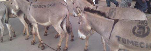donkeys-in-town